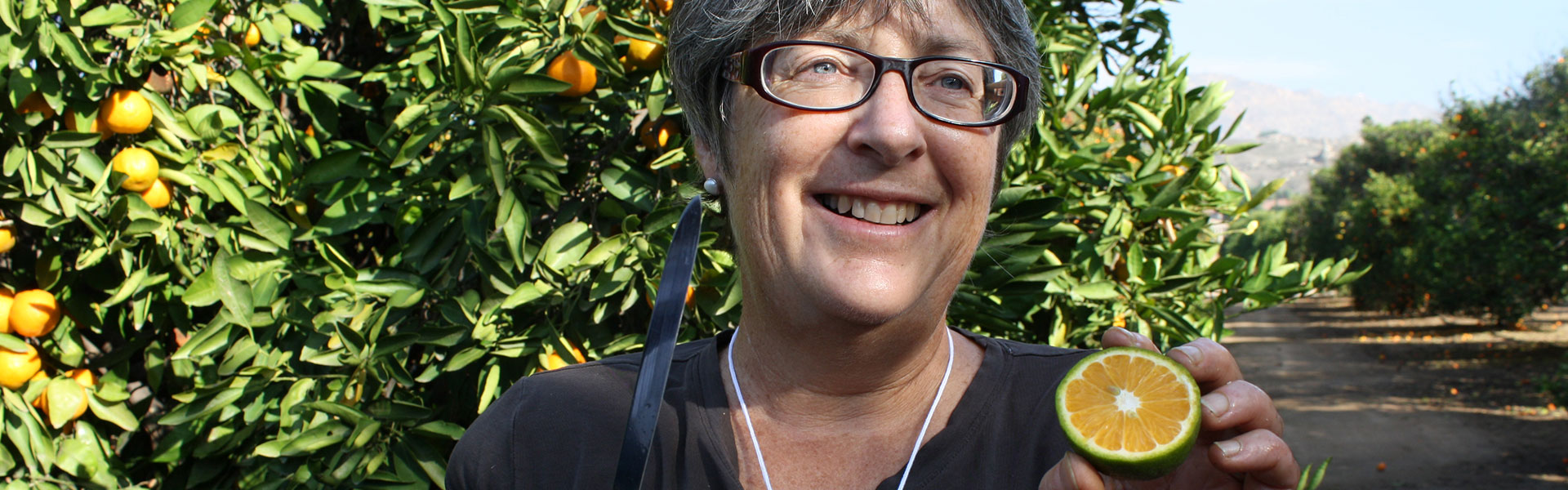 Dr Tracy Kahn, curator of the UCR Citrus Variety Collection and holder of the Givaudan Citrus Variety Collection Endowed Chair