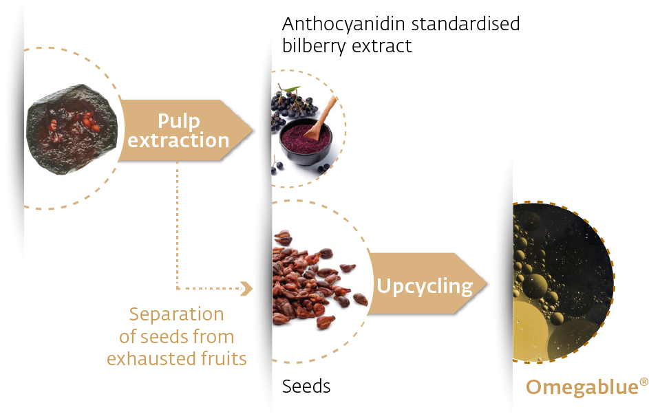 Infographic on upcycling of bilberries