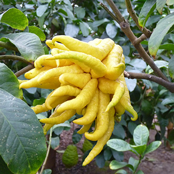TasteTrek Citrus, Italy