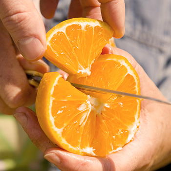 TasteTrek Citrus