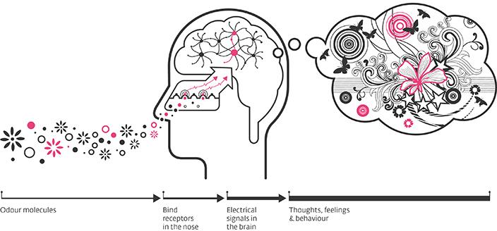 part of brain where taste and smell meet joe